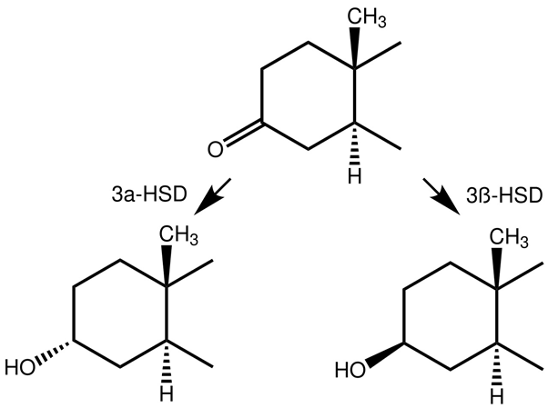 Reduction at carbon 3 of the A-ring
